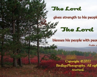 Trees and Plains of Dolly Sods with Bible Verse