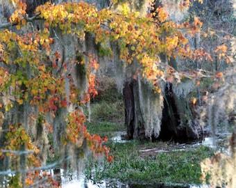 Reflecting Pool in Autumn, Phinizy Swamp - Augusta, Georgia