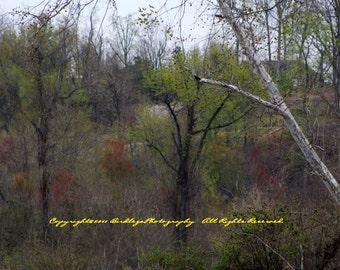 Pretty Trees on the Trail at Dutch Gap, Virgina