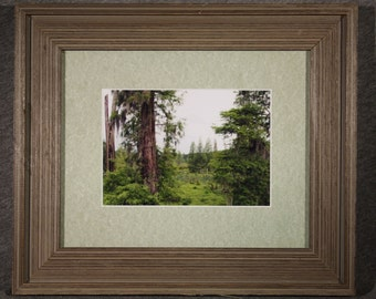 Phinizy Swamp in Green - 5x7 matted and framed in an 8x10 Barnwood Frame