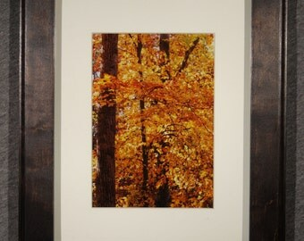 Golden Tree at Pocahontas State Park 5x7 matted and Framed in a 8x10 Maple with Dark Walnut Dyed Frame