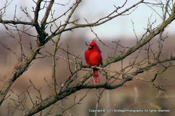 The Cardinal Two - Dutch Gap, Virgina