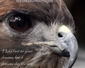 Beautiful Red tailed hawk