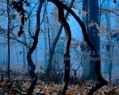A CAGE In The FOGGY WOODS  8 X 10 Fine Art Print - blue trees nature sky foggy fog cage woods leaves autumn