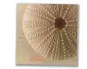 Sea Urchin Art, Bathroom Art, Neutral Home Decor, Sea Shell Photography, Tan, Beige, Brown, Bathroom Decor, 8x8, 10x10, 12x12