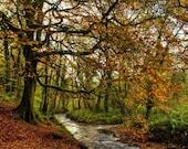 """Autumn in Ireland - Irish Print - Fine Art Print 18"""" X 12"""" - Midleton, Cork - Irish Photography - Irish Art"""
