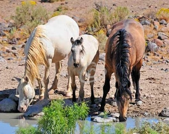 "At Water - Mustangs - 5"" x 7"""