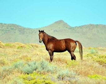 """Diamond - Mustang Stallion - 8.5"""" x 11"""""""