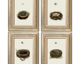 Vintage Bird's Nest Set of Four Digital Download: 8x10 sized images, similar to Restoration Hardware Baby
