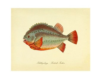 Vintage Fish Print Series 1 Plate 2 Digital Download: 8x10, specimen, fishes, vintage-look, printing and framing, decoupage
