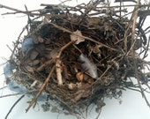 BIRD NEST w/ FEATHER : Authentic Found Treasure, House Finch Nest--Wedding, Shower, Home Decor, Photography, Teaching, Collection, Crafts