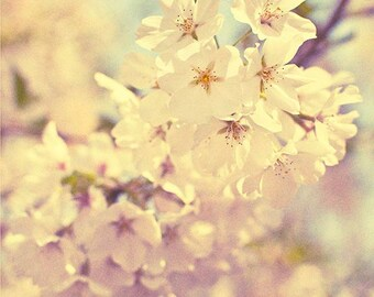 Fine Art Photograph Home Decor Spring Cherries 11x14 Flowering