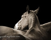 Horse Photo, Two Horses Resting Together 11x14