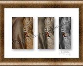 """Horse Photo Triptych Art, """"Watchful"""", Choice of Frame, FREE SHIPPING (U.S.)"""