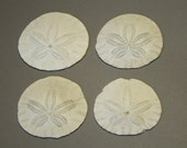 REDUCED, 25% off....Sand Dollars from Oregon