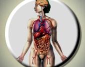 "HUMAN FEMALE ANATOMY Anatomical Biology 2.25"" Large Round Fridge Magnet"