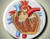 "HUMAN ANATOMY Anatomical HEART Medical 2.25"" large Round Fridge Magnet"