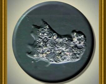 """AMOEBA Protozoa Science Biology 2.25"""" Large Round Fridge Magnet"""