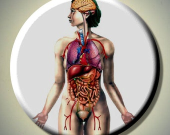 "HUMAN FEMALE ANATOMY Anatomical Biology 2.25"" Large Round Fridge Magnet"