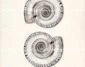 Sea Shell  - Vintage Double Sundial Giclee Print 8x10