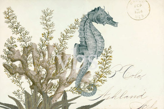 "Coastal Decor Collage ""Sea Horse""  Natural History Art Print 6x4"