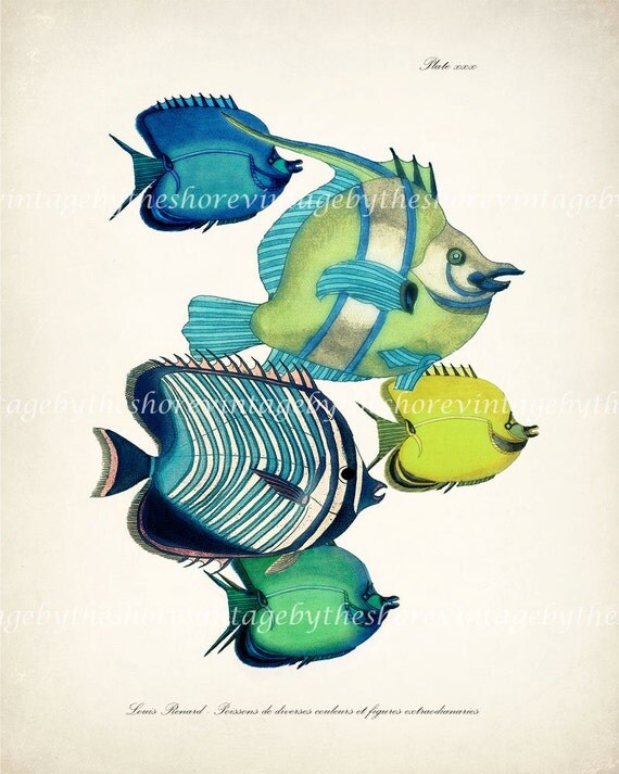 Vintage Fanciful Fish Collage - Coastal Decor Art  Print of Original - Plate xxx Aquarium Life