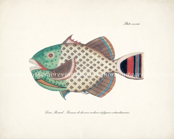 Vintage Fanciful Fish Natural History Art Print - Plate xxxiii