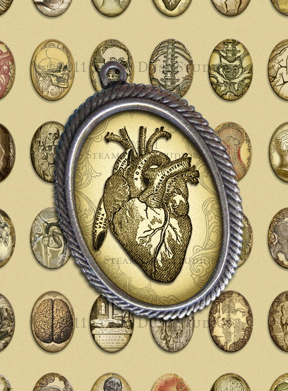 Antique Anatomy images - 18x25mm Cameo Oval Images - Digital Collage Sheet - Victorian, Goth, Steampunk - Instant Download & Print