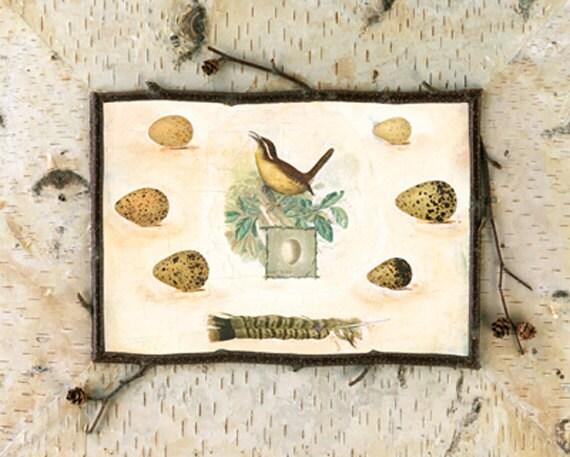 "Bird, Adirondack  16x20"""