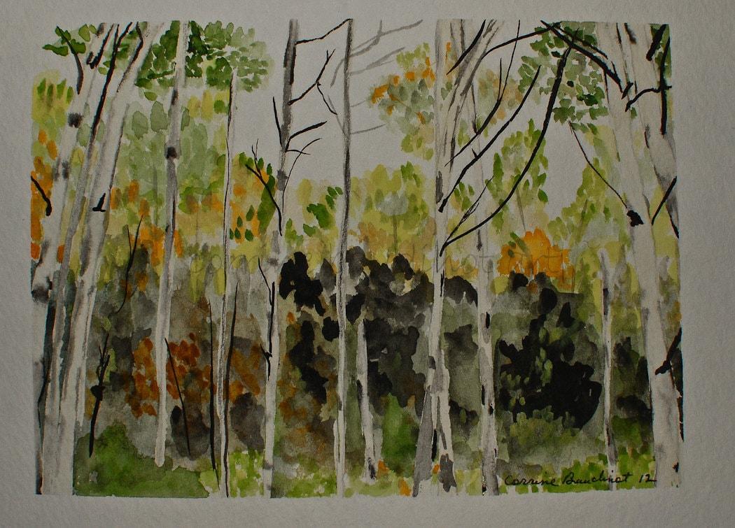 Aspen Trees Watercolor Painting Original 5x7