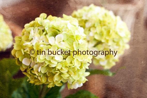 Green Flowers 5X7 Print