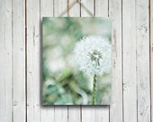 Dandelion - flower photography - green and white decor - green and white art - dandelion art - dandelion photo - home and office decor