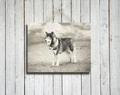 Wolf Waiting - Black and white wolf photo - Wolf dog photo - Wolf decor - Rustic decor - Native American style decor - Black and White photo