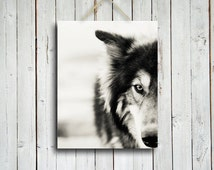 The Wolf -  Wolf decor - Black and White wolf - Wolf dog photo - Wolf photography