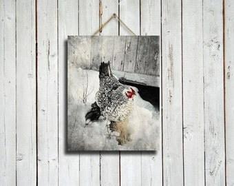Cozy Hen - 8x10 photo - hen photograph - kitchen decor - chicken decor - chicken photograph - chicken photo - country decor - chicken