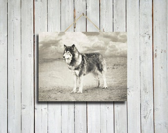 Wolf Waiting - Black and white wolf photo - Wolf dog photo - Wolf decor - Rustic decor - Native American style decor - Black and White photo