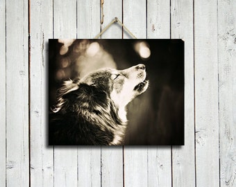 The Howling - black and white wolf howling - wolf howling - wolf decor - wolf dog - wolf photograph - wolf photo