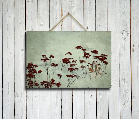 Blooms in Snow - 12x18 Canvas.- Red flowers art - Red wall decor - Red art - Red flowers wall decor - flowers photo - flowers photograph.