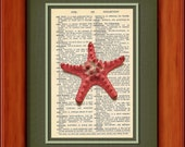 "Dictionary Art Print - Red Starfish - 6 3/4"" x 9 3/4"" - Art Print on Upcycled Dictionary Page - FRAME NOT INCLUDED"