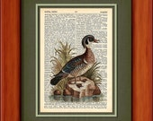 "Dictionary Art Print - The Summer Duck Of Catesby - 6 3/4"" x 9 3/4"" - Art Print on Upcycled Dictionary Page - FRAME NOT INCLUDED"