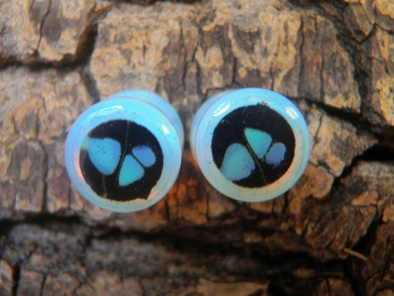 0G Real Butterfly Opal Plugs - Graphium Weiskei