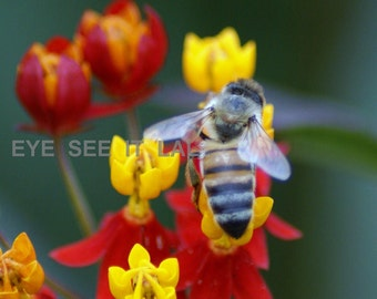 red and yellow flowers with  bee photo card 5x7