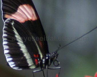 PIANO KEY  Butterfly  5x7 photo greeting card, blank inside, card stock acts as a matt to place into a 5x7 frame.