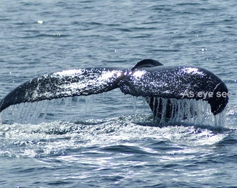 5X7 PHOTO PRINT Whale Tail sparkling from the sun photo