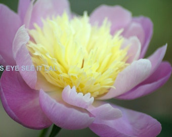 Pink Flower with yellow center Photo Greeting card 5x7 blank inside