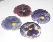Four Pretty Pansy-Real Pressed Flower- Refrigerator Magnets