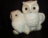 Cute White Owl Couple