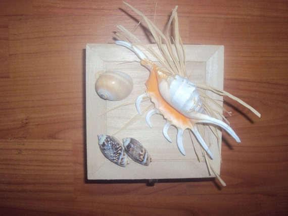 Wooden Box adorned with a Spider Seashell, Raffiki, and Other Seashells