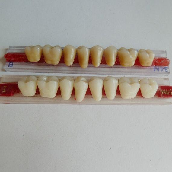 2 Sets of Porcelain Enamel Dental Teeth