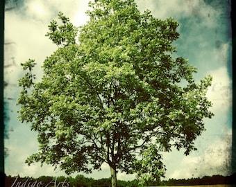 "Tree Photograph - metallic photo print ""June"""